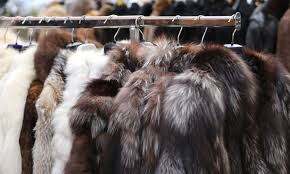 Nueva ordenanza podría prohibir las ventas de pieles en Minneapolis