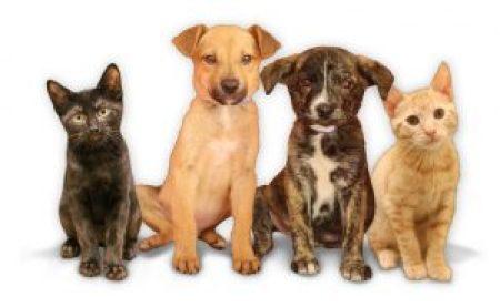 Promueve Minneapolis adopción de mascotas